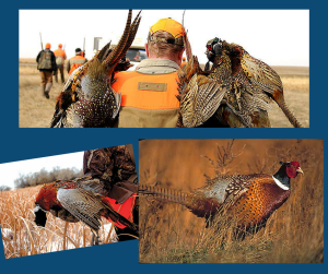 South Fork Ranch Pheasant Hunt