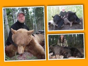 Silverfox Bear Hunt