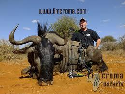 blue-wildebeest-Limcroma