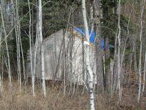 Bear Camp