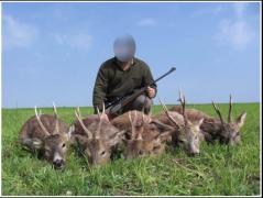 Roe-deer-Serbia