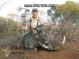 Warthog-Limcroma