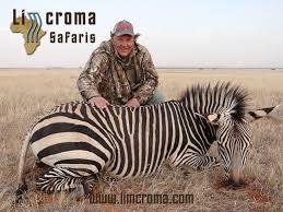 zebra-Limcroma